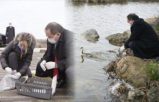 Yaralı 'Bahri' cinsi ördek sağlığına kavuşup...