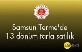 Samsun Terme'de 13 dönüm Satılık tarla