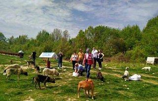 Samsun'da hayvanseverler tam kapanma sürecinde...