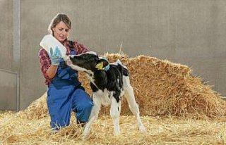 Trouw Nutrition, buzağı mamalarıyla verimli inek...