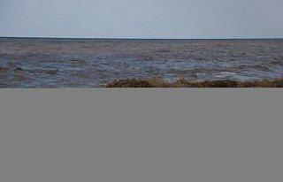 Bozkurt'taki sel nedeniyle Karadeniz'in rengi kahverengiye...