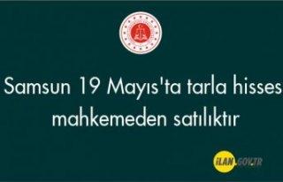 Samsun 19 Mayıs'ta tarla hissesi mahkemeden...