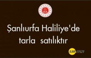 Şanlıurfa Haliliye'de tarla satılıktır