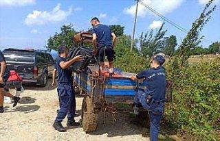 Sinop'ta selin ardından arama kurtarma faaliyetleri...