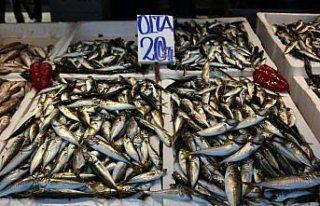 Av yasağının sona ermesiyle Trabzon'daki balık...
