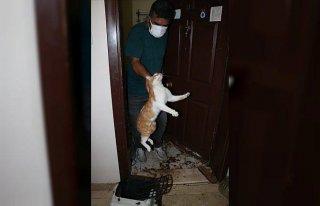 Bolu'da kapısı çilingir yardımıyla açılan daireden...