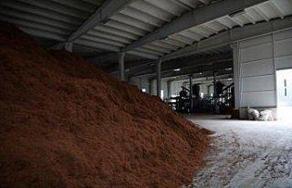 Çay çöpünden mangal kömürü üretecek fabrikada...