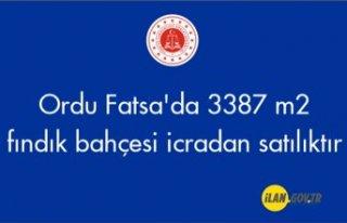 Ordu Fatsa'da 3387 m² fındık bahçesi icradan...