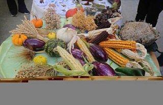 Artvin'de yerel tohumlar halk pazarında vatandaşlar...