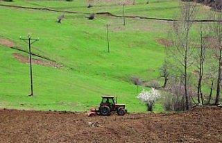 Ordu'da 10 bin dönüm atıl arazi ekonomiye kazandırıldı