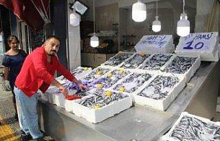 Sinop'ta hamsinin kilosu 10 liraya düştü