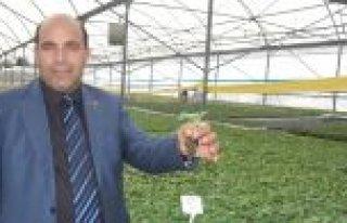 32 Milyon Sebze Fidesi Nisan Ayında Toprakla Buluşturulacak