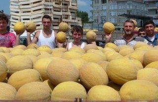 Karpuz-Kavun Üreticisi Altın Yılını Yaşıyor...