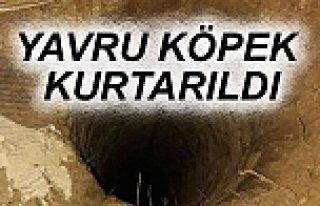 Beykoz'da 70 Metre Kuyuya Düşen Yavru Köpek 10...