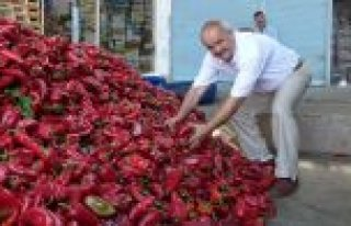 Kırmızı Biber Sebzelerin Lokomotifi Oldu