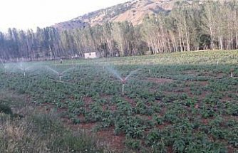 Gümüşhane'de suya kavuşan arazilerden ekonomiye 54 milyon liralık katkı