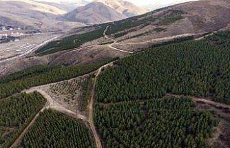 Çorak ve dağlık arazi 25 yılda 1 milyon ağaçlı ormana dönüştü