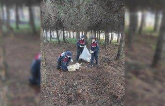 Düzce'de jandarma sokak ve yaban hayvanları için mama ve ekmek bırakıldı