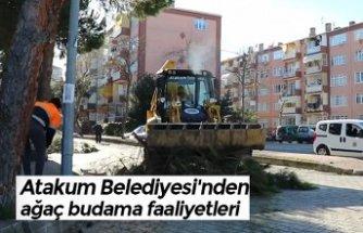 Atakum Belediyesi'nden ağaç budama faaliyetleri