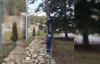 Gerede'da çam ağaçlarına kuş kafesleri yerleştirildi