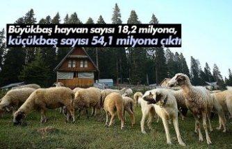 Büyükbaş hayvan sayısı 18,2 milyona, küçükbaş sayısı 54,1 milyona çıktı