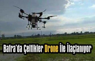 Bafra'da Çeltikler Drone İle İlaçlanıyor