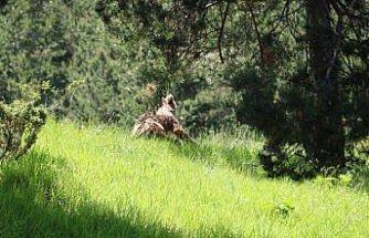 Bolu'da doğa gezisine çıkan genç, ayı yavrusuyla karşılaştı