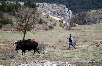 İstanbul'da müdürlüğü bırakan muhasebeci köyüne dönerek hayvancılık yapmaya başladı