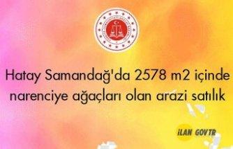 Hatay Samandağ'da 2578 m² içinde narenciye ağaçları olan arazinin 1/2 hissesi icradan satılıktır(çoklu satış