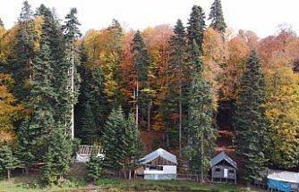 Pürenli Yaylası'nda sonbaharda renk cümbüşü yaşanıyor