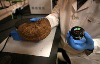 Reishi mantarından sedef ve egzama hastaları için krem üretildi