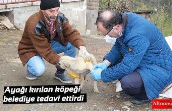 Ayağı kırılan köpeği belediye tedavi ettirdi