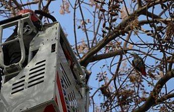 Bolu'da kafesinden kaçan papağanın yakalanması için çalışma başlatıldı