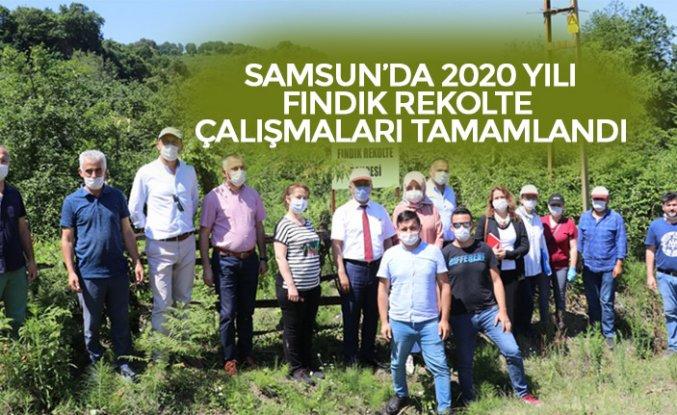 SAMSUN'DA 2020 YILI FINDIK REKOLTE ÇALIŞMALARI TAMAMLANDI