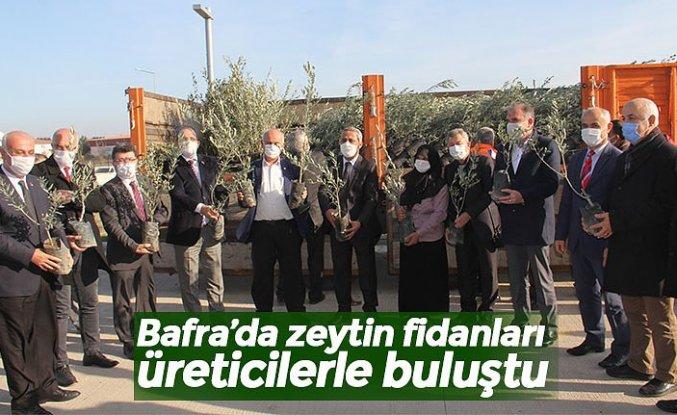 Bafra'da zeytin fidanları üreticilerle buluştu