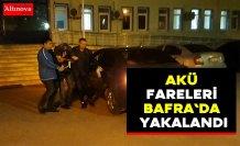 Akü fareleri Bafra`da yakalandı