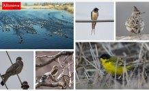 'Doğu'nun Çukurova'sı' kuşlarla cıvıl cıvıl