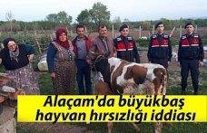 Alaçam'da büyükbaş hayvan hırsızlığı iddiası
