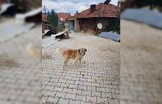 Köpeklere kürekle vuran kişiye para cezası