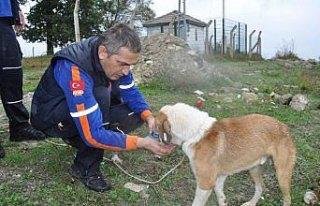 Bartın'da uçurumda mahsur kalan köpek kurtarıldı