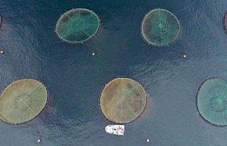 Karadeniz somonu Japon sofralarına