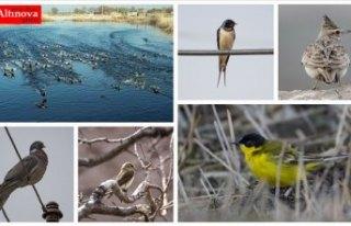 'Doğu'nun Çukurova'sı' kuşlarla...