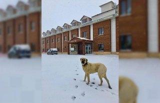 Ordu'da nisanda kar yağışı