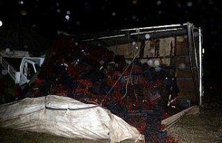 Kiraz yüklü kamyon kamyonetin üzerine devrildi:...