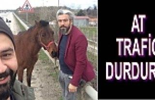 Ahırdan Kaçan At Trafiği Birbirine Kattı