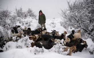 Giresunlu çiftçiler karla mücadele ediyor