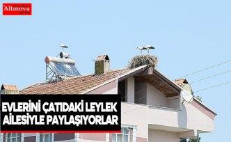 Evlerini çatıdaki leylek ailesiyle paylaşıyorlar