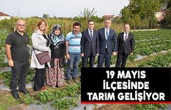 19 Mayıs İlçesinde Tarım Gelişiyor