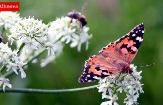 Böcek türlerinin yüzde 40'ı yakın gelecekte yok olabilir