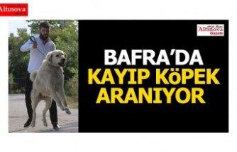 Bafra'da kayıp köpek aranıyor